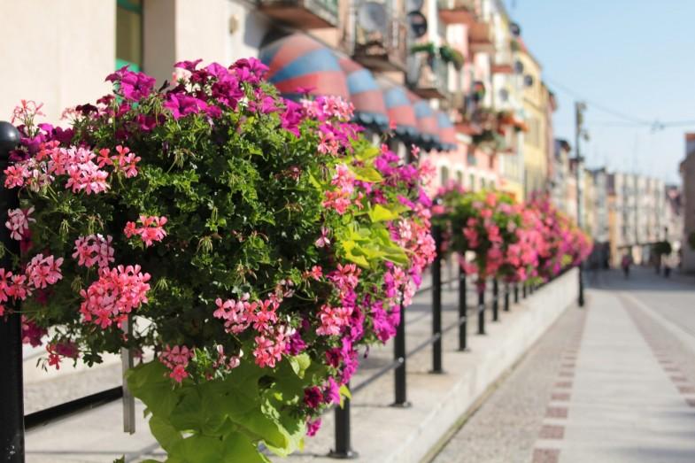 Blumenkästen der Marke Atech