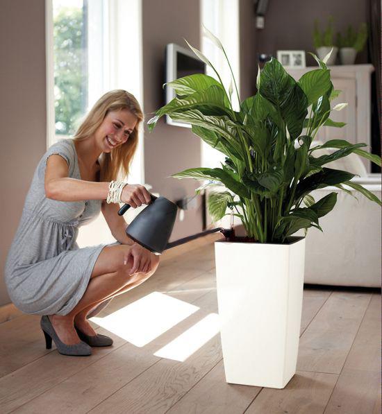 wie sollten die blumen gegossen werden greenspired. Black Bedroom Furniture Sets. Home Design Ideas