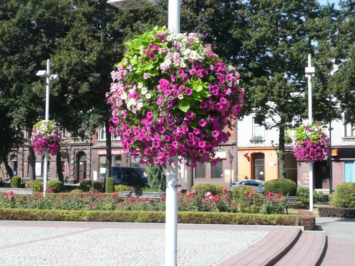 Blumenampeln Jiflor