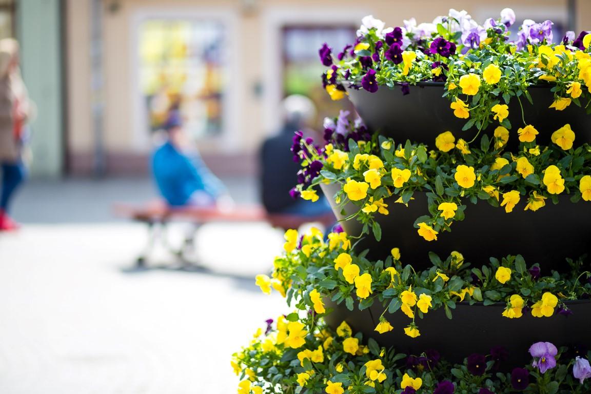 Blumenkaskaden-24