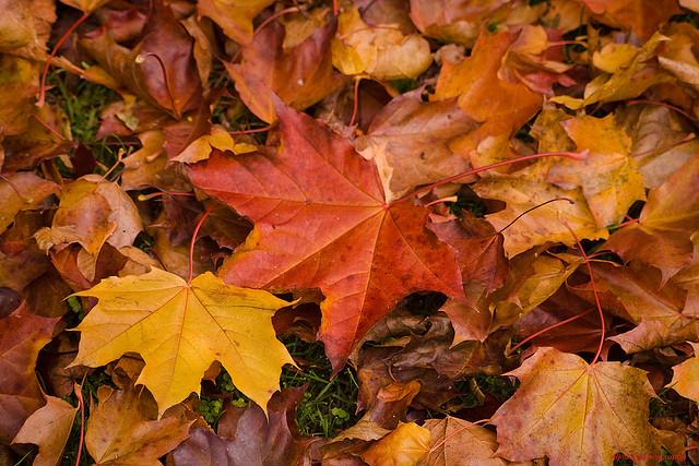 Herbstliche Dekorationen