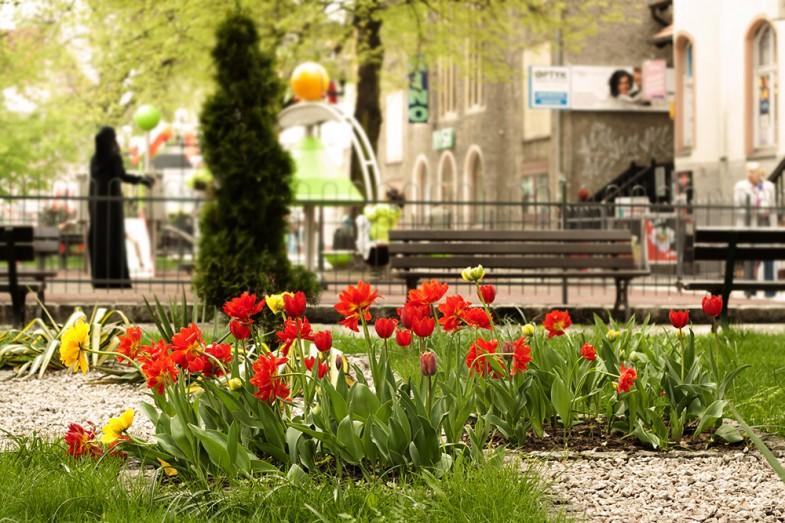Die Tulpen