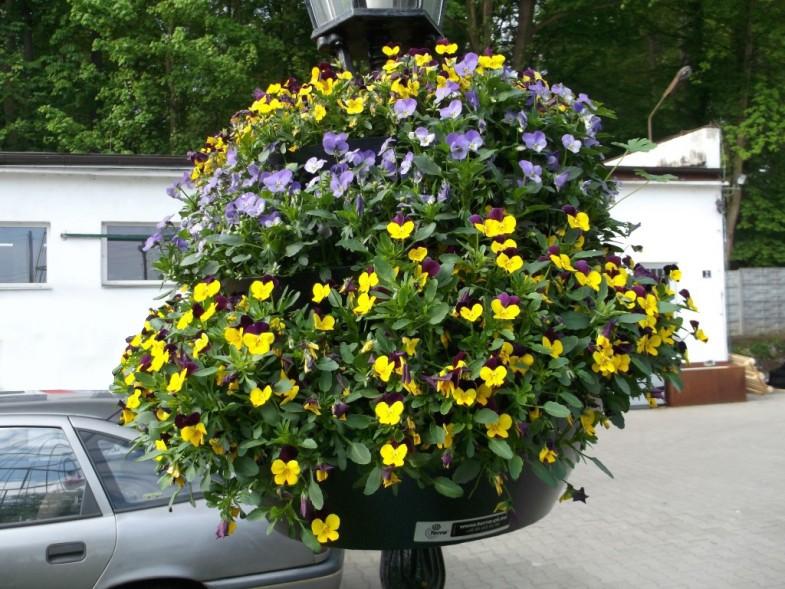 Blumenampel W600 Terra