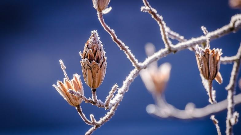 Wie soll man Garten auf den Winter vorbereiten?