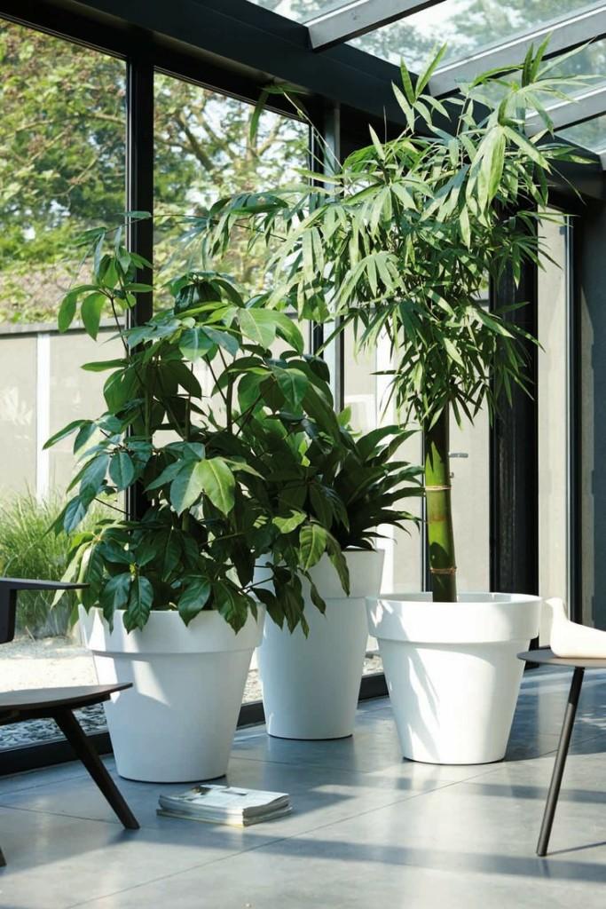 Wie wählt man die gesunden Pflanzen?