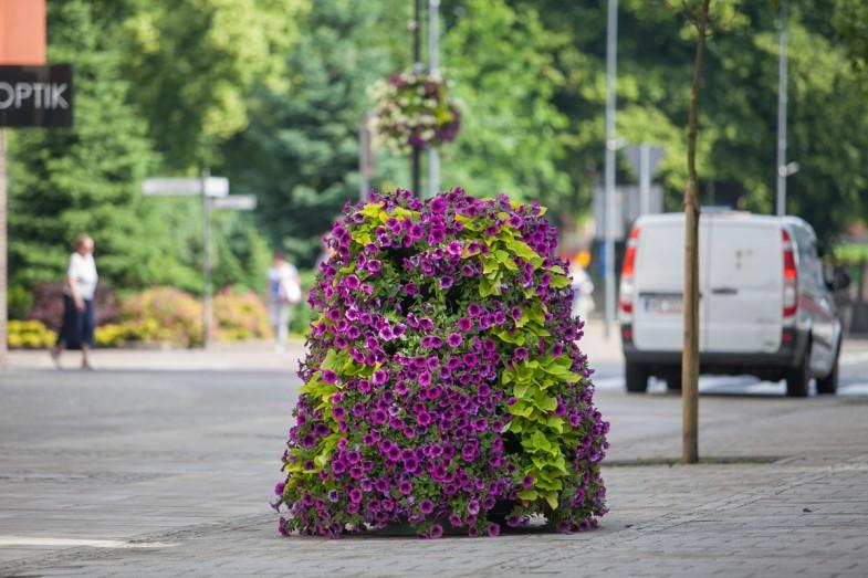 Das komplette Bepflanzungsservice