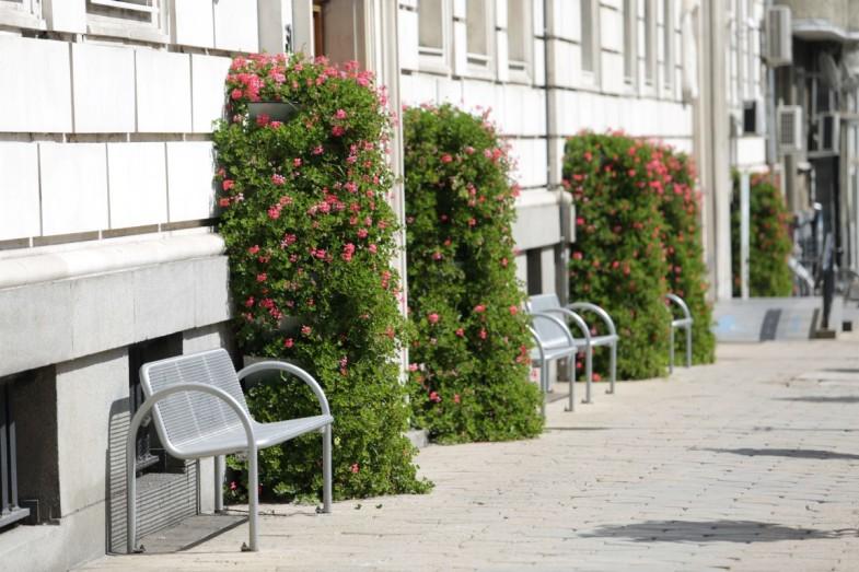 Ideen für Bepflanzung: Dekoration der Wände und Umzäunungen