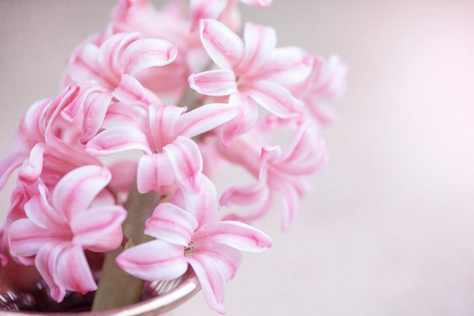 Frühlingsinspiration: die Hyazinthe