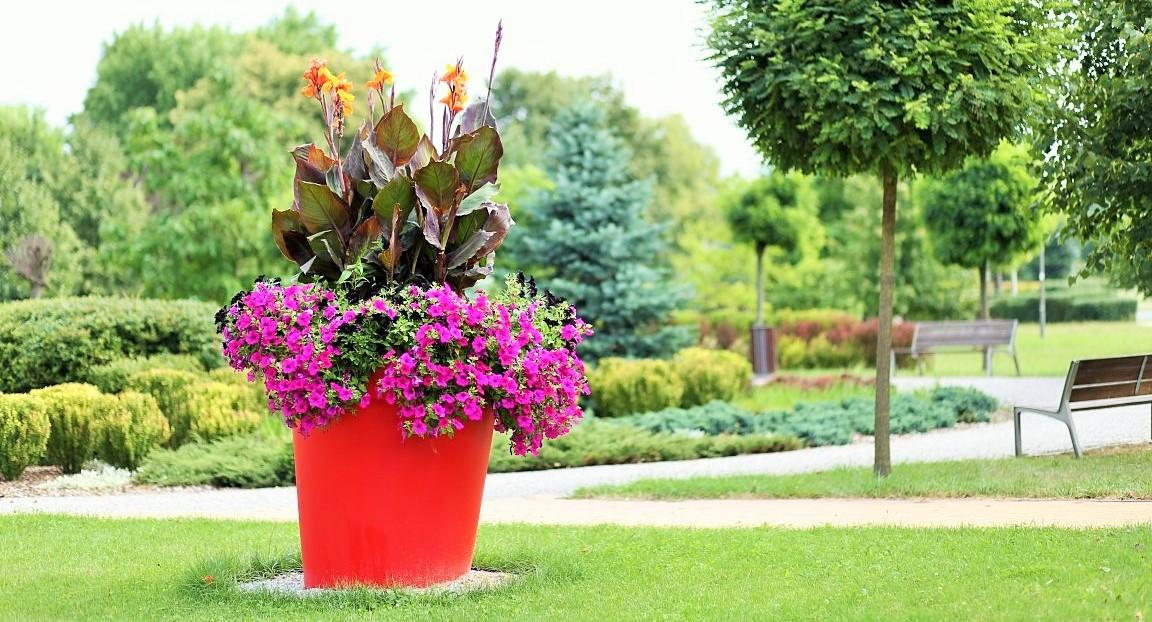 Die Blumentöpfe im Stadtpark? Warum nicht?!