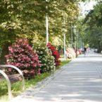 Blumenkaskade2