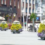 BlumenkaskadeA