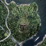 Von Angesicht zu Angesicht mit dem Wald