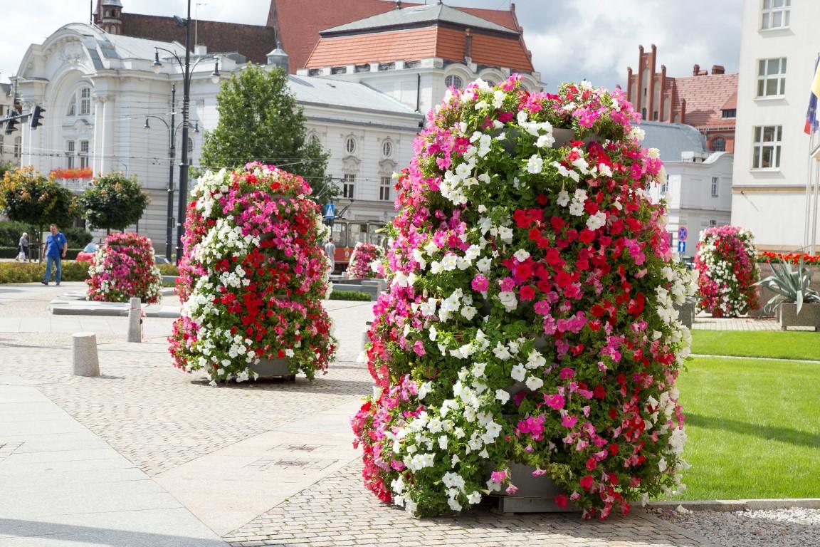 Stadtplätze, Gehsteige, Grünanlagen voller Blumen. Wie ist das möglich?