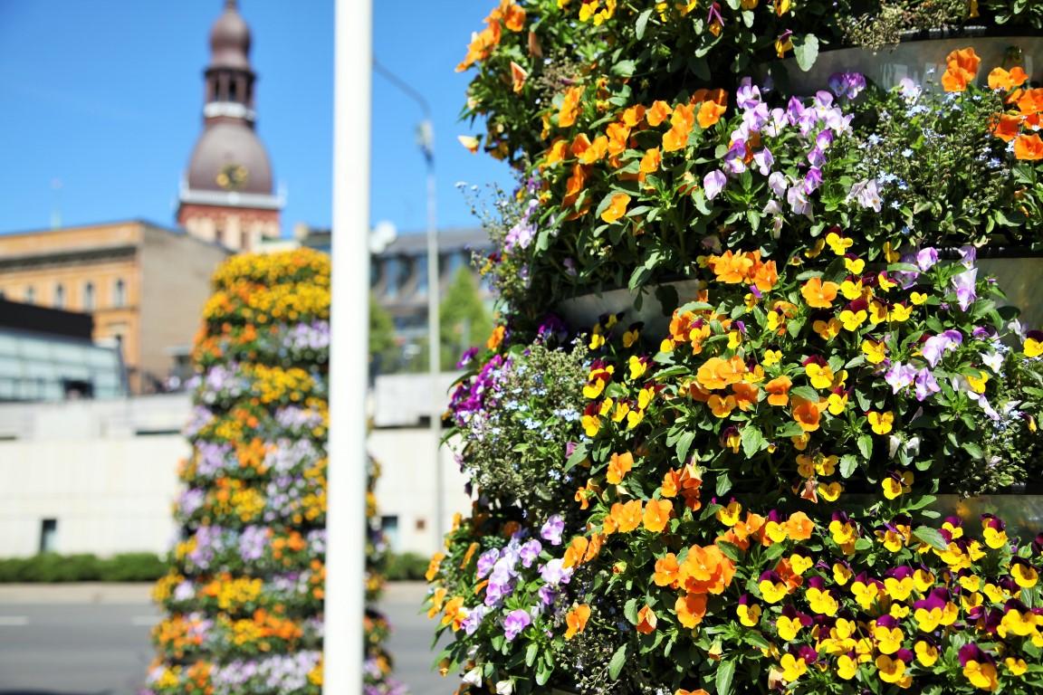 Riga in voller Blüte! Blumentürme in der Hauptstadt Lettlands