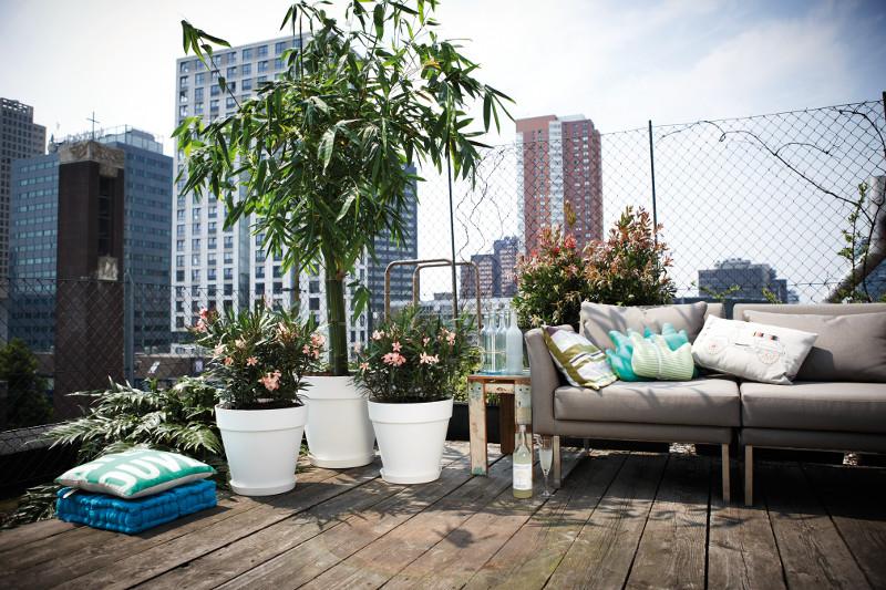 Terrasse voller Bäume – wie schafft man seinen eigenen Wald?