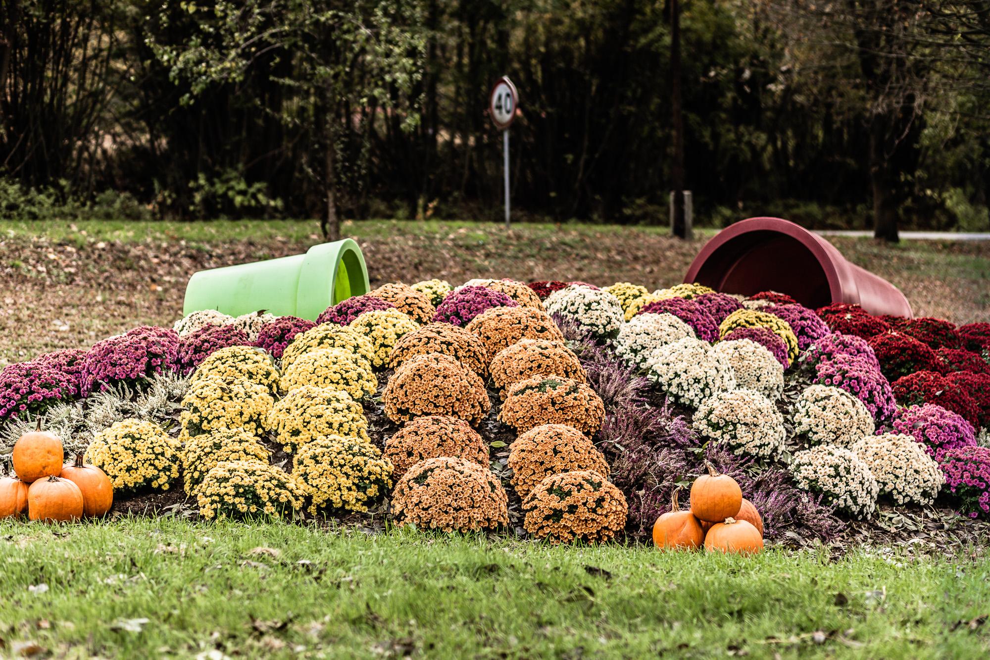 Herbstbepflanzung in der Stadt – wir widerlegen die Mythen